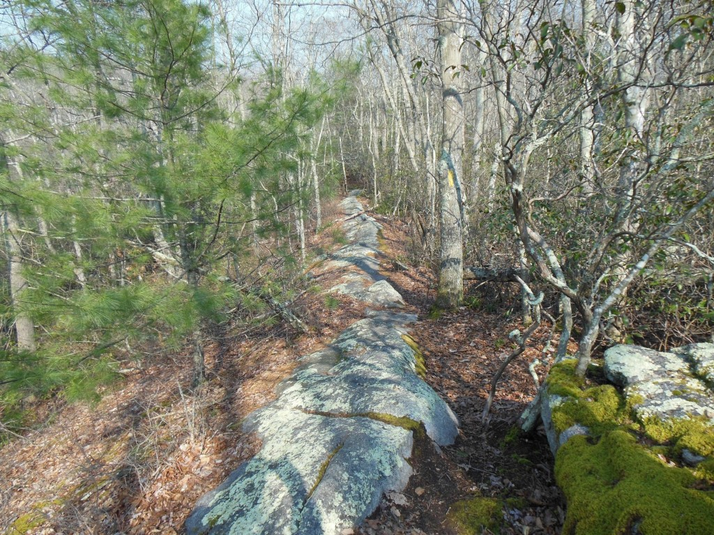 A view of the yellow portion of the Narragansett Trail in Hopkinton, RI. The rocky ridge is part of a monadnock, a rock feature highly resistant to erosion.