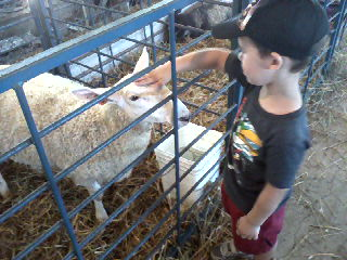 The sheep were gentle and my grandson was also. He loves animals!