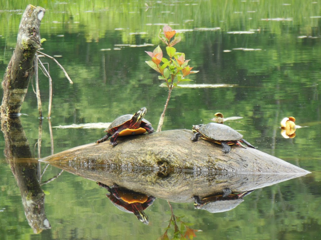 """""""Come out of your shell Shorty! We have work to do."""""""